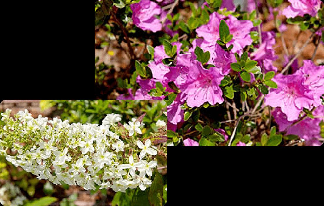 四季の花々 イメージ